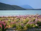 Lake Tekapo, 2008