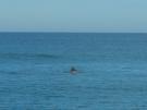 stockton-dolphins